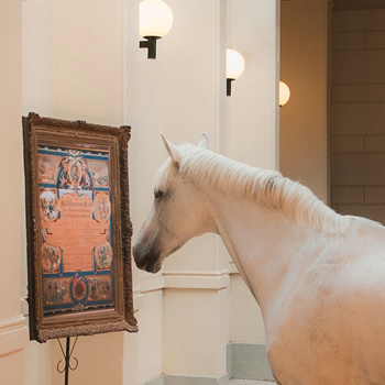 A horse looking at art