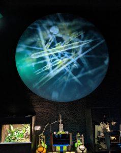 Cyanobacteria on the big screen