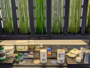 Examples of algae in various products